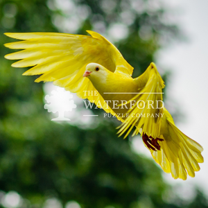 Yellow Bird: Animal Photography