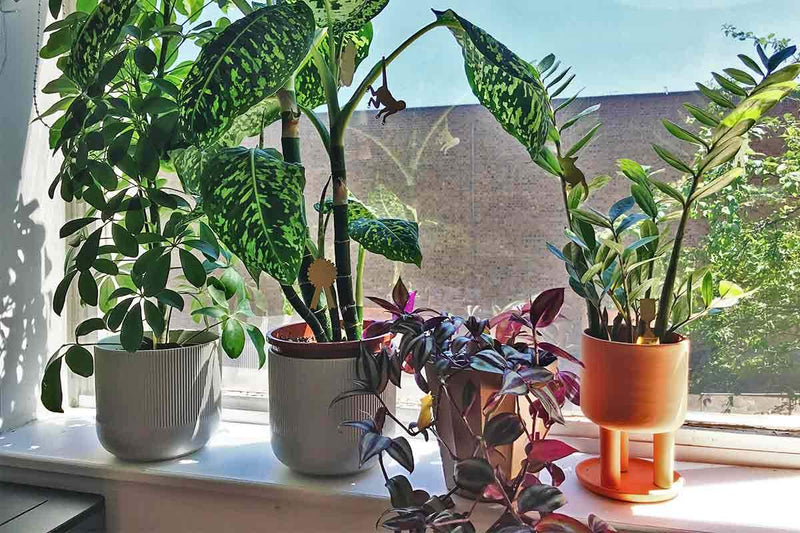 5 House Plants Care Tips!
