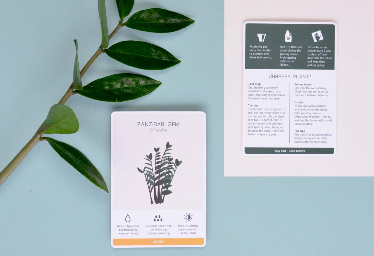 Zamioculcas easy plant care tips