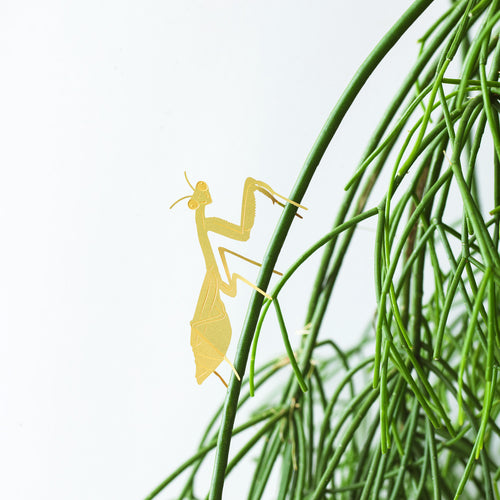 Plant Animal Mantis by Another Studio