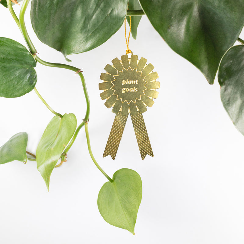 Fun plant gifts for all plant lovers