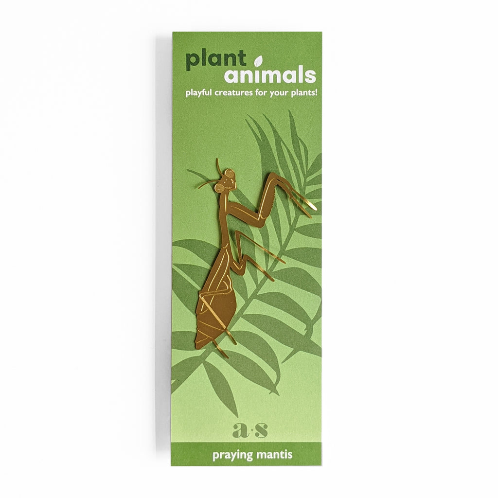 Praying Mantis plant animal gift