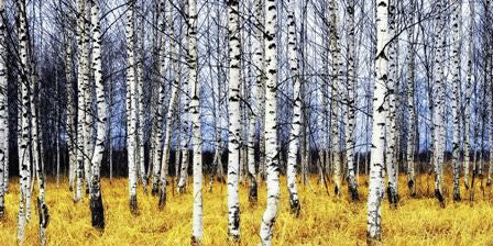 Canvas Prints - Rich Grove In Autum (120cm x 70cm)