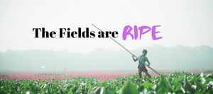 The Fields are Ripe