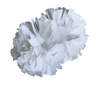 Metallic white dance pom 4""