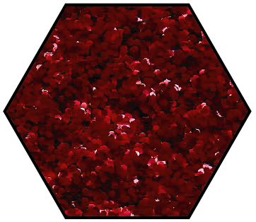 Red Delicious Medium Cut Ecoglitter