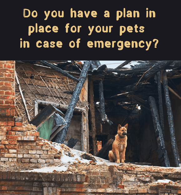 Is your pet prepared for an emergency?