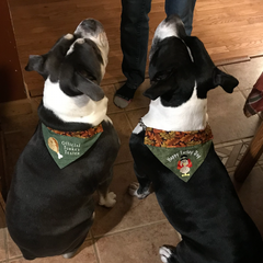 thanksgiving Dog Bandanas