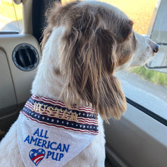 All American Pup - Buster