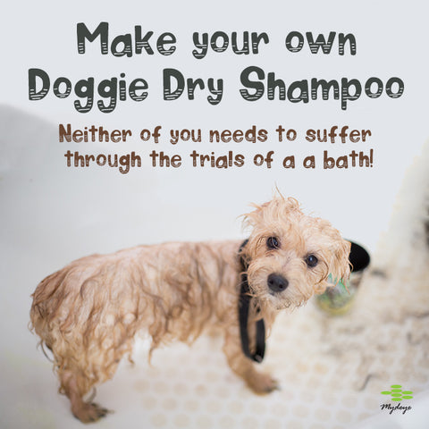 Make your own dry dog shampoo