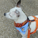Squirrel Patrol / Over the Collar Dog Bandana