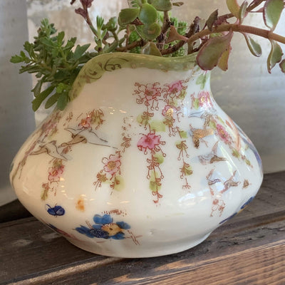 Chinoiserie Pitcher Planter with Sedum - PORCH