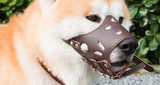 Adjustable_Leather_Dog_Muzzle_-_Size_L_-_For_Trademe14_RROZ5JUMX1OZ.png