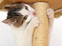 Cat_scratching_Post_-_Coffee_Brown_8_S15BRBQATQPY.jpg