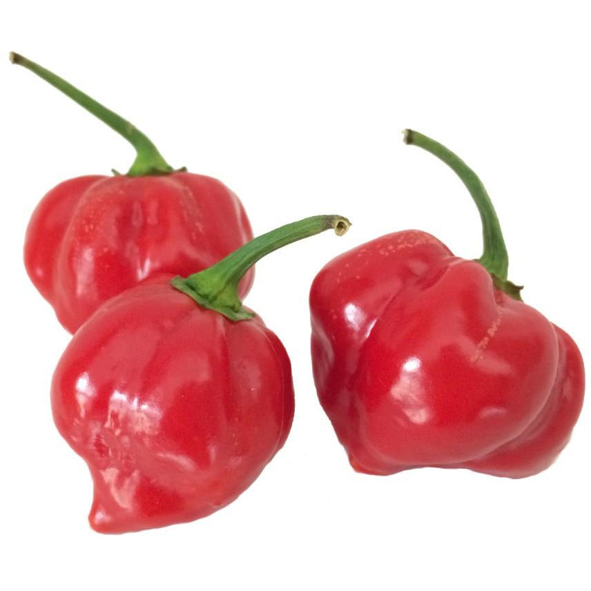 Seeds - Chile Habanero Red