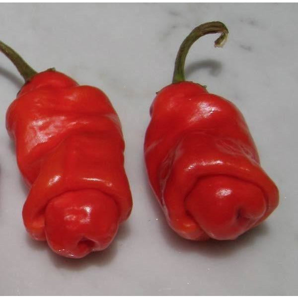 Seeds - Chile Peter Pepper Red