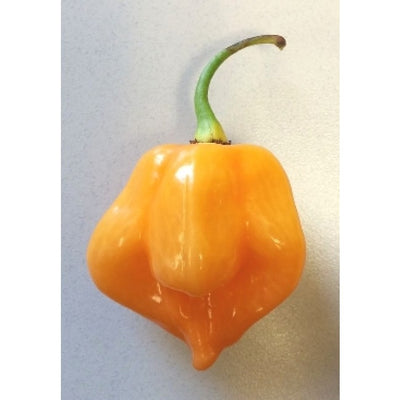 Seeds - Chile Scotch Bonnet YELLOW