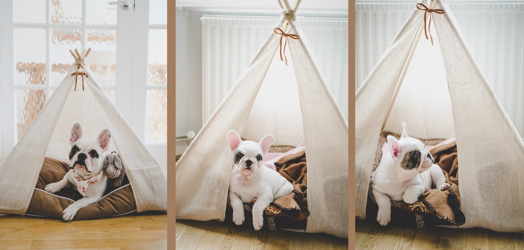 French Bulldog relaxing in a Dog Teepee from Estilo Living - Buy Dog Teepee Beds Online, Pet Teepees & Other Pet Accessories