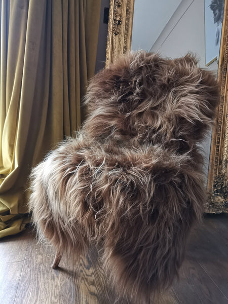 Large rusty brown Icelandic sheepie