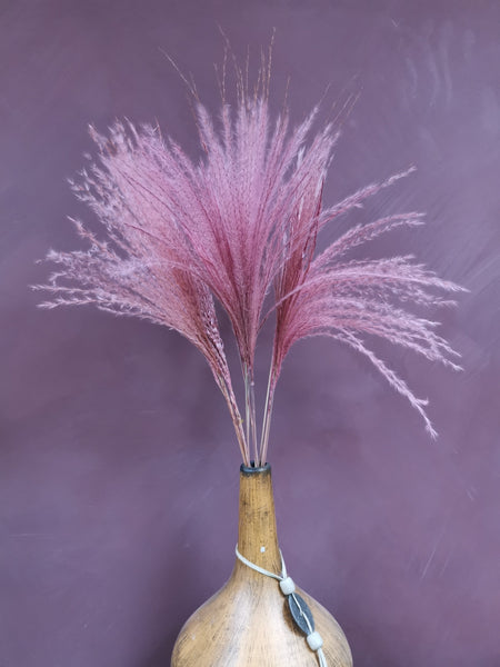 A small bunch of pink stipa grass