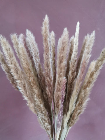 Thin pampas grass dried plume 20 stems
