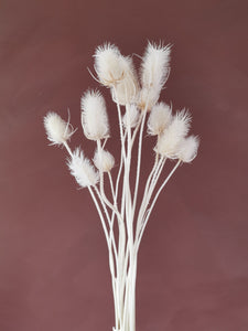 Dried white thistles