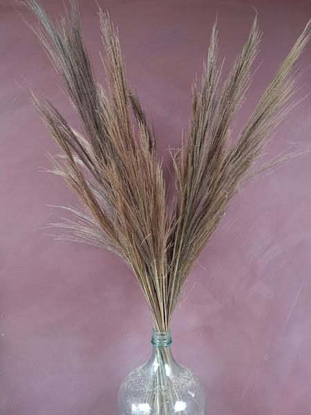 Tall dried grass gynerium