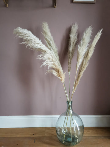 Tall natural dried pampas grass