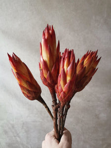 Dried Protea.. A beautiful combination of deep red and yellow protea stems
