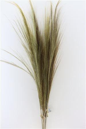 Tall dried natural grass