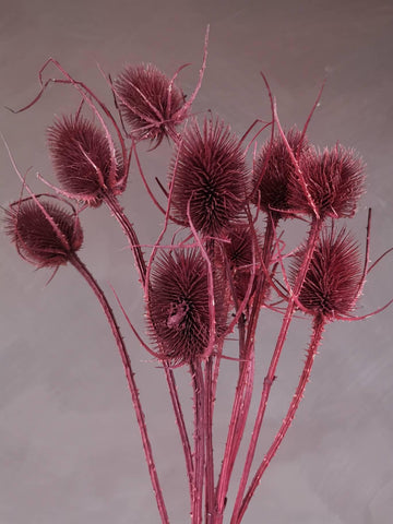 A bunch of burgundy thistles