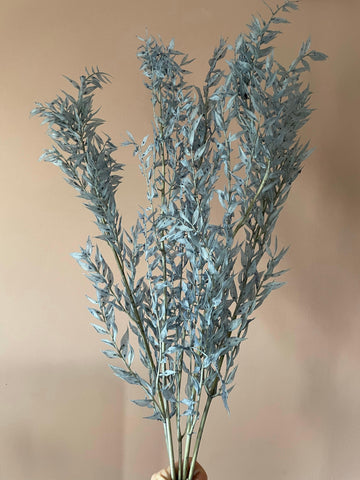 Preserved blue/grey ruscus