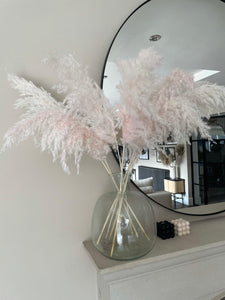 Mini pink pampas grass