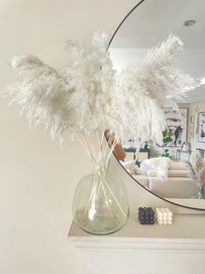 Mini white pampas grass