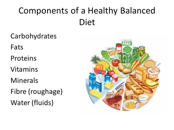 Nutrition Components Breakdown