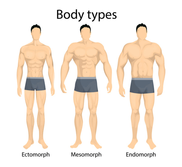 The Three Body Types