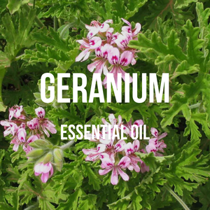 Geranium Essential Oil (Egyptian)