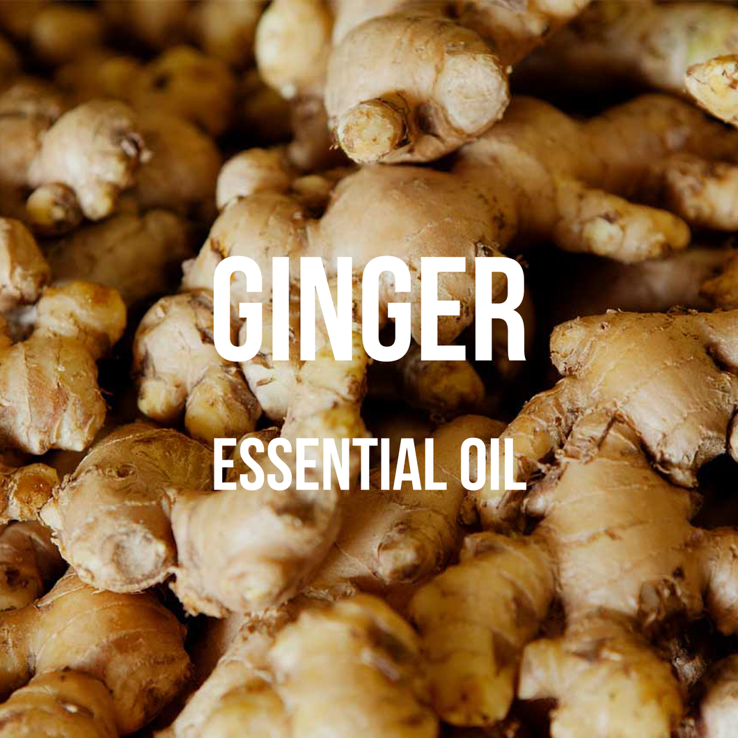 Ginger Essential Oil (Zingiber Officinalis)