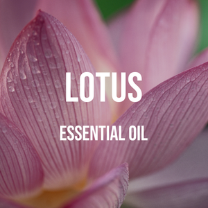 Lotus Essential Oil (Nelumbo Nucifera)