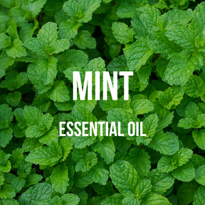 Mint Essential Oil (Indian)