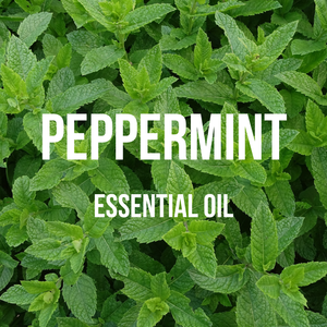 Peppermint Essential Oil (Indian)
