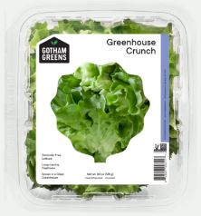 Lettuce, New England Crunch, hydroponic, price each