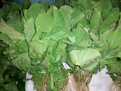 Arugula, organic bunch