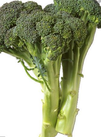 Broccoli, locally grown from Wards NEW! 1.25-1.5#
