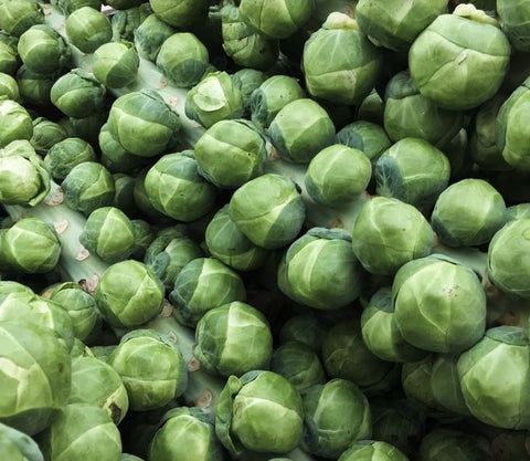 Brussels sprouts on the stalk- local