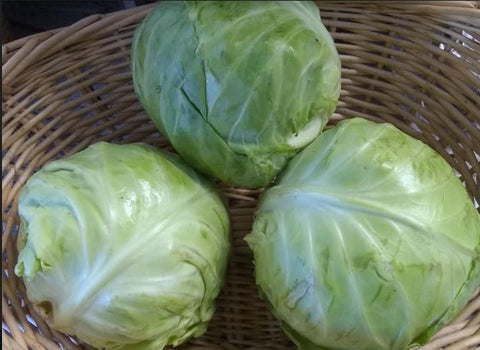 Cabbage, small green or purple