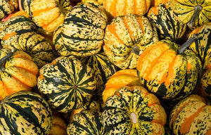 Squash, carnival, SUPER SWEET, price each