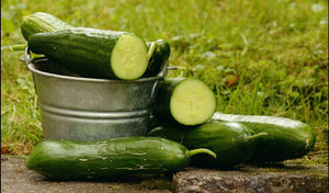 Cucumber, slicing, organic  - Price for 2#