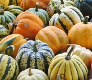Pumpkins, striped decorative