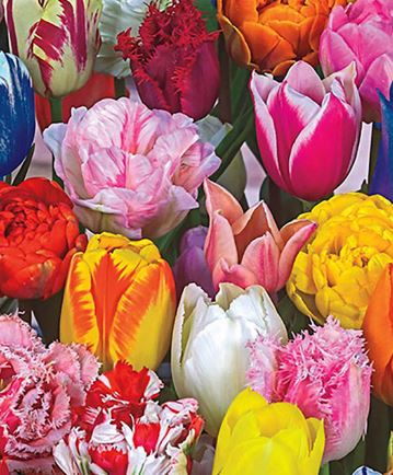 Tulips!! Fancy Mix, for Mom! 10-stem bunch